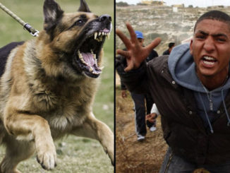 After a Muslim migrant kicked a homeless man's dog for no reason, the fed-up canine decided to fight back and exact its well-deserved revenge.